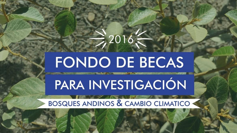 Se abre convocatoria del Fondo de becas para investigación en bosques andinos y cambio climático